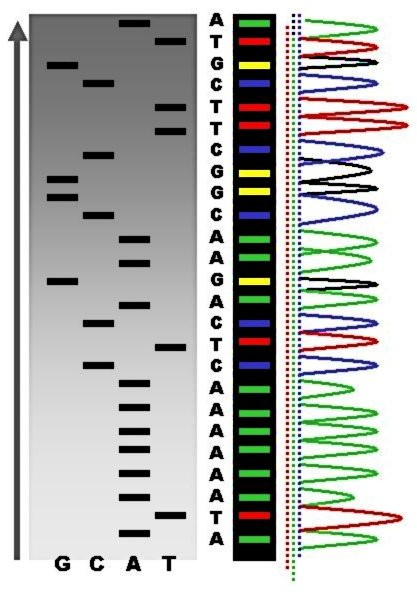Gene Technology, figure 1