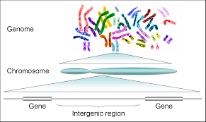 Gene Technology, figure 2