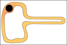 Specialised Cells, figure 4