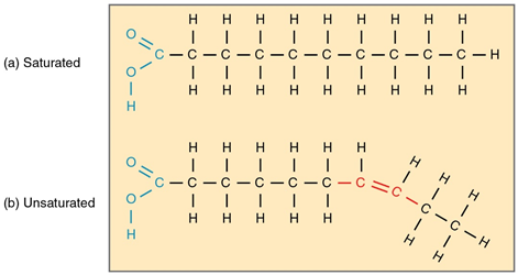 Biological Molecules, figure 3