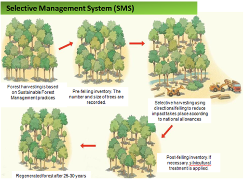 ASustainable Future for Rainforests?, figure 1