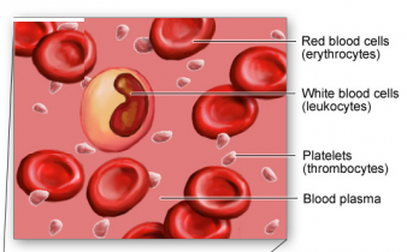 Blood, figure 1
