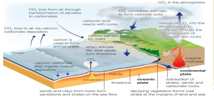 The Biochemical Carbon Cycle, figure 1
