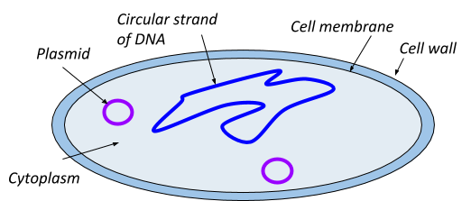 Cell Structure, figure 1