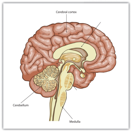 The Nervous System, figure 1