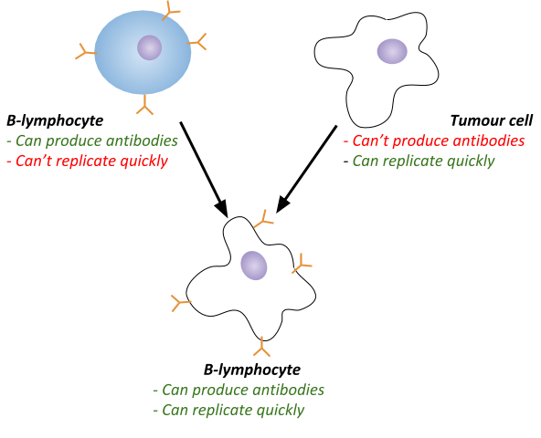 Fighting Disease, figure 1